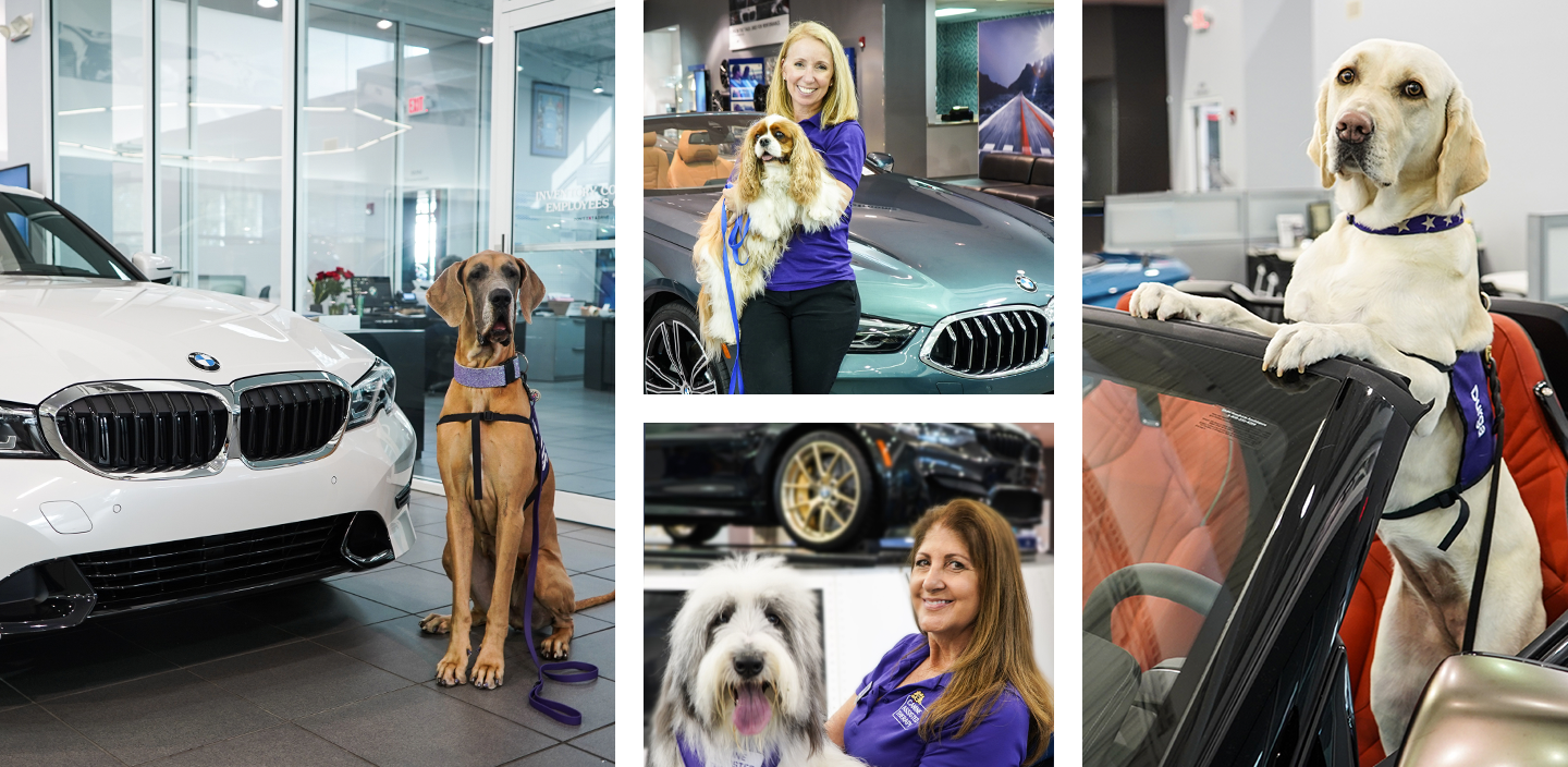 Dogs at BMW dealership